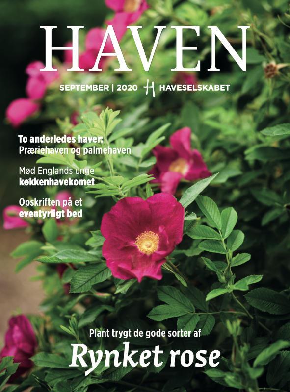 Haven september 2020 magasin